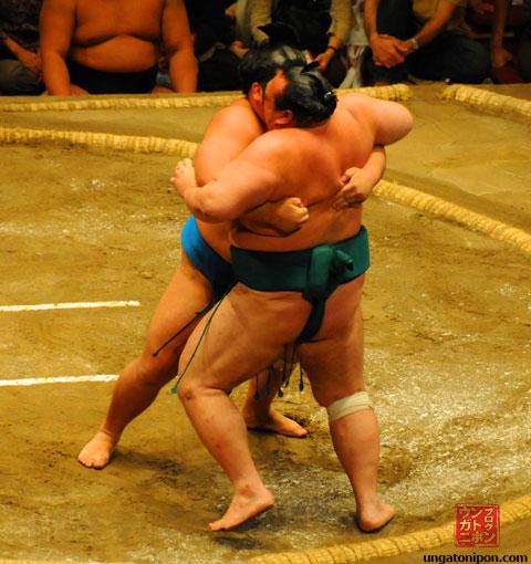 Luchadores de Sumo pellizcando
