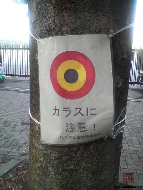 Cuidado con los cuervos gigantes de Japón