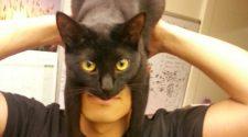 Poniéndose un gato por sombrero: Neko wo kaburu